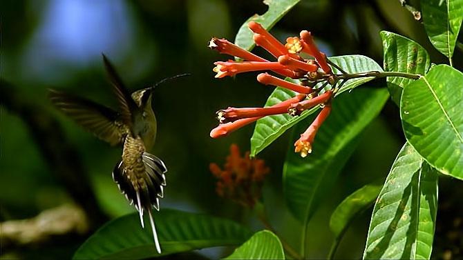 Vahşi Amazon galerisi resim 17