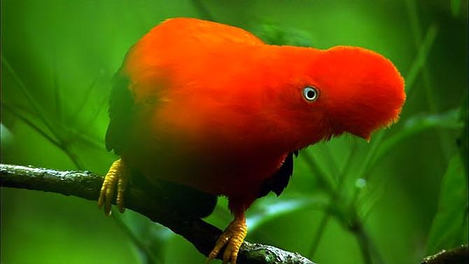 Vahşi Amazon galerisi resim 19