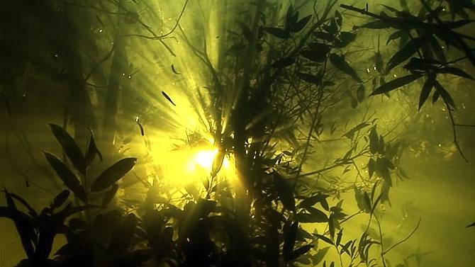 Vahşi Amazon galerisi resim 22
