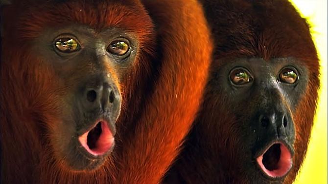 Vahşi Amazon galerisi resim 24