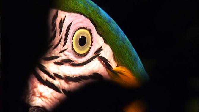 Vahşi Amazon galerisi resim 25