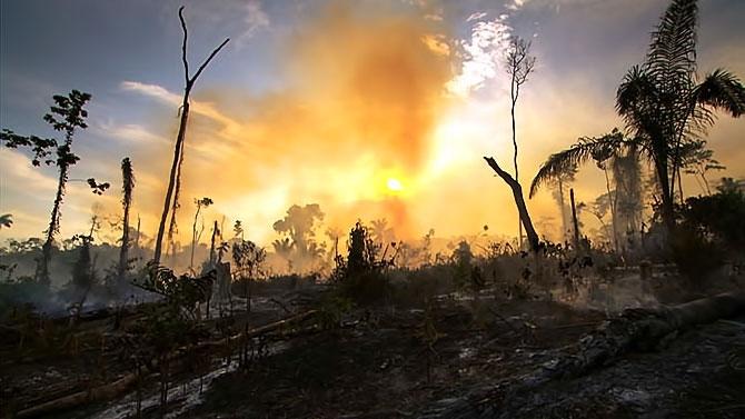 Vahşi Amazon galerisi resim 27