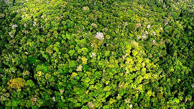 Vahşi Amazon galerisi resim 32