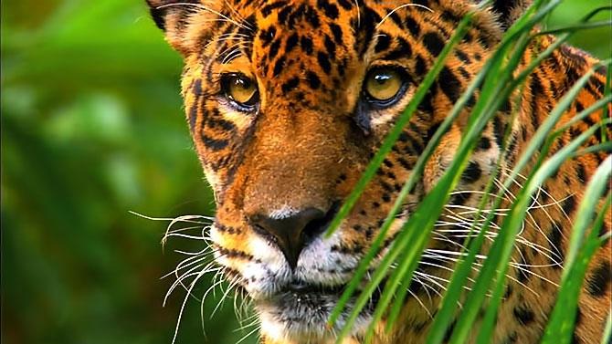 Vahşi Amazon galerisi resim 5
