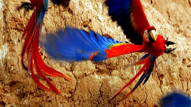 Vahşi Amazon galerisi resim 7
