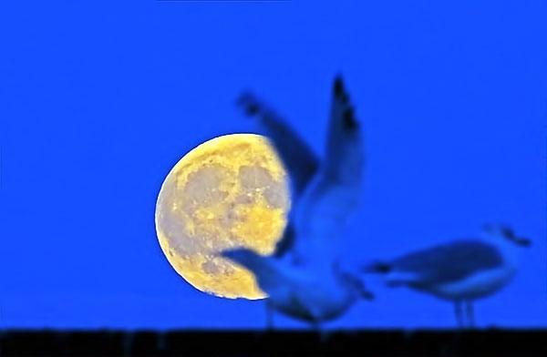 Reuters objektifinden 'Süper Ay' manzaraları galerisi resim 1
