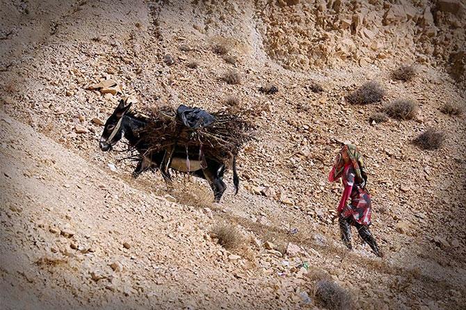 Şengal Dağı'nda hayat... galerisi resim 33