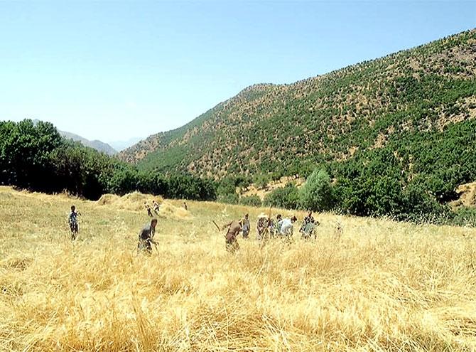 Kürdistan'da İmece kültürü böyle yaşatılıyor galerisi resim 11