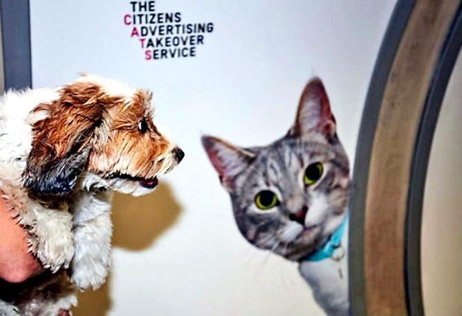 Londra metrosunu kediler bastı galerisi resim 1