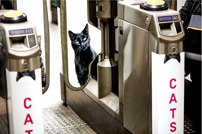 Londra metrosunu kediler bastı galerisi resim 10