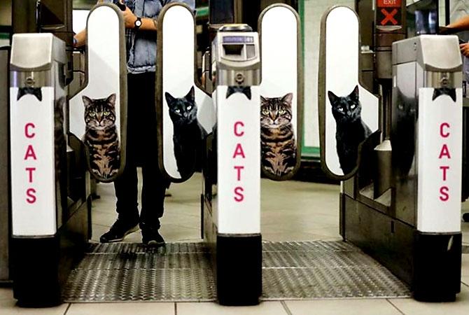 Londra metrosunu kediler bastı galerisi resim 12