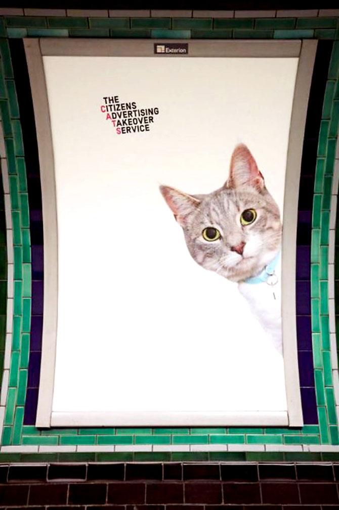 Londra metrosunu kediler bastı galerisi resim 13