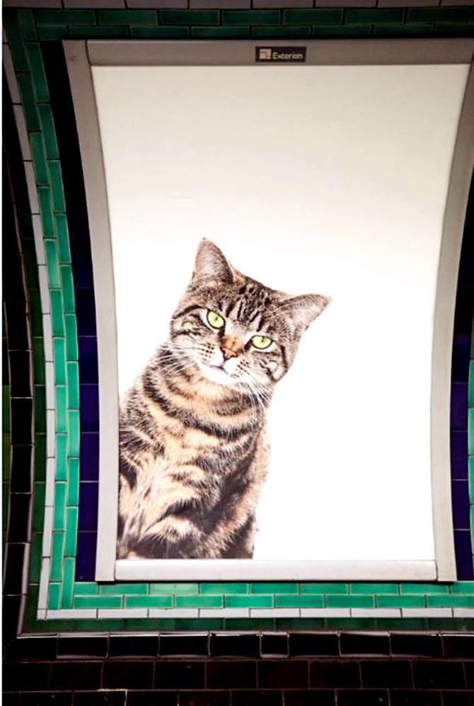 Londra metrosunu kediler bastı galerisi resim 15