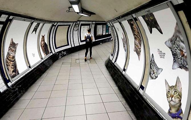 Londra metrosunu kediler bastı galerisi resim 2