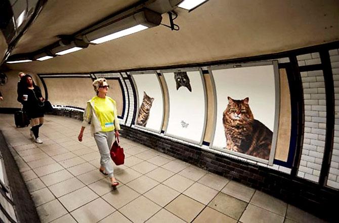 Londra metrosunu kediler bastı galerisi resim 3