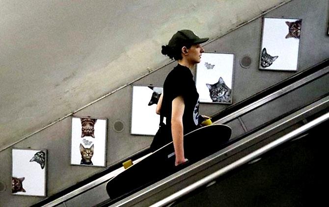 Londra metrosunu kediler bastı galerisi resim 4