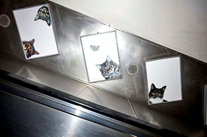 Londra metrosunu kediler bastı galerisi resim 7