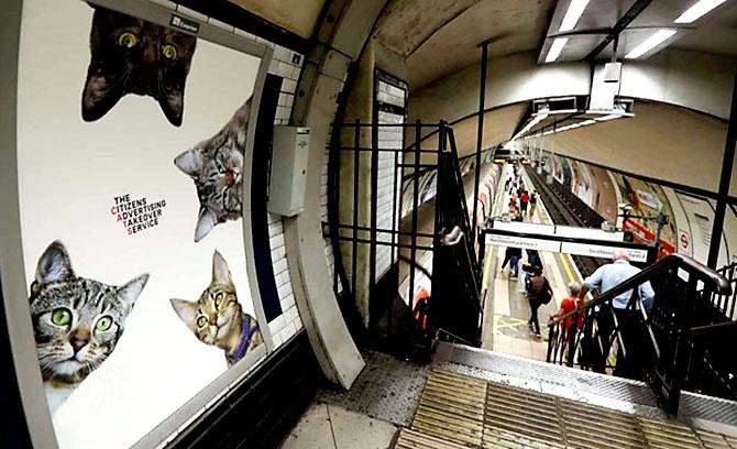 Londra metrosunu kediler bastı galerisi resim 8