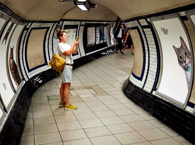 Londra metrosunu kediler bastı galerisi resim 9