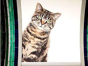 Londra metrosunu kediler bastı