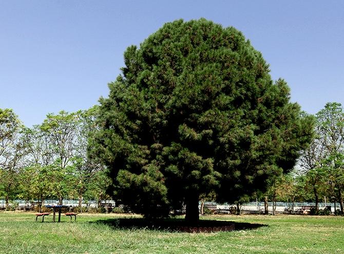 Hewler'in en büyük parkı: Sami Abdurrahman Parkı galerisi resim 12