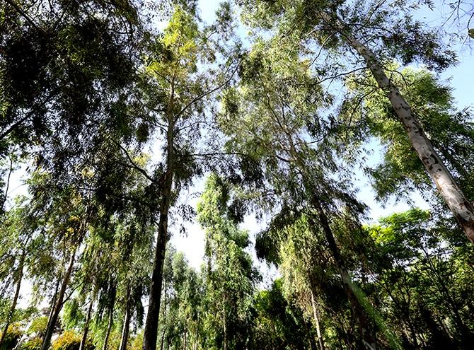 Hewler'in en büyük parkı: Sami Abdurrahman Parkı galerisi resim 15