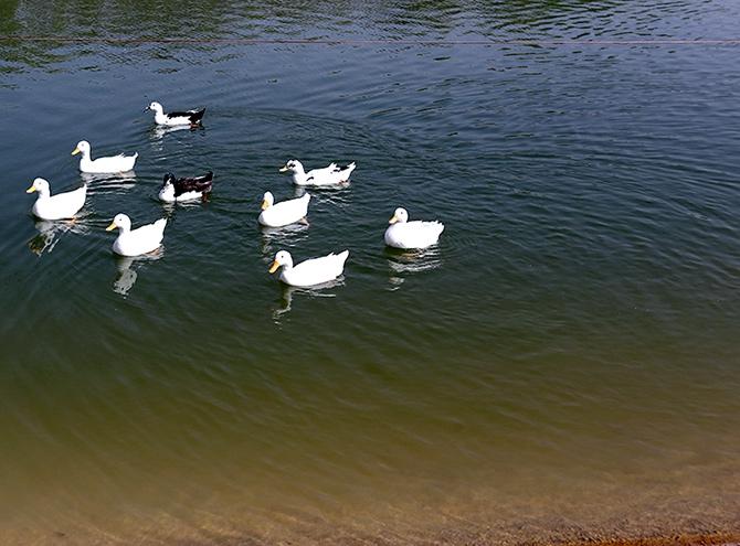 Hewler'in en büyük parkı: Sami Abdurrahman Parkı galerisi resim 5