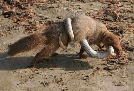 Hayvanların Öfkesi Başka Olur galerisi resim 11