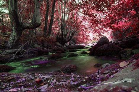 Doğadan Mükemmel Görüntüler galerisi resim 22
