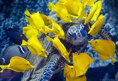 Doğadan Mükemmel Görüntüler galerisi resim 7