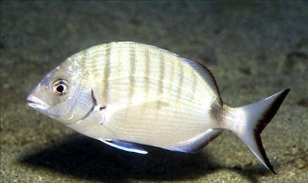 Hangi balık ne zaman yenir? galerisi resim 12
