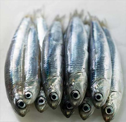Hangi balık ne zaman yenir? galerisi resim 4