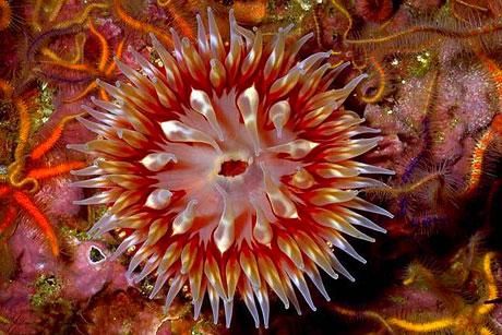 Denizin altından muhteşem görüntüler galerisi resim 15