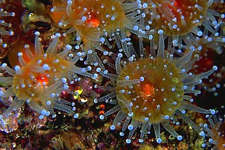 Denizin altından muhteşem görüntüler galerisi resim 16