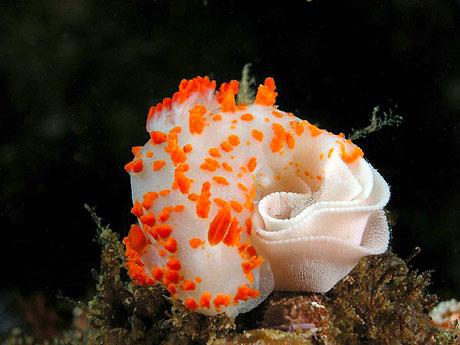 Denizin altından muhteşem görüntüler galerisi resim 17
