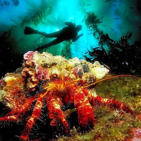 Denizin altından muhteşem görüntüler galerisi resim 8