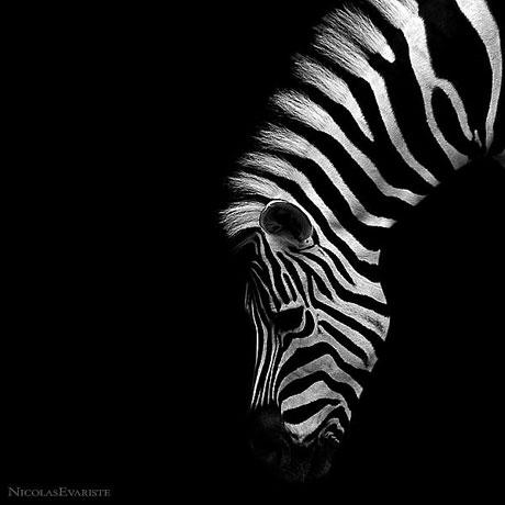 Siyah ve Beyaz galerisi resim 12