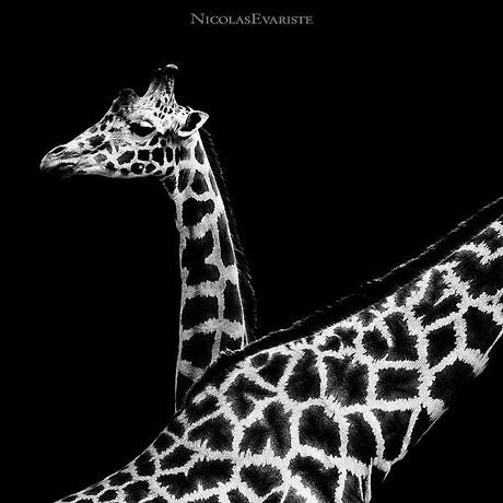 Siyah ve Beyaz galerisi resim 8