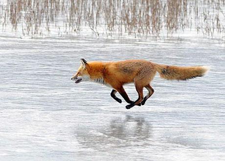 Hayvanlar dünyasında neler oluyor? galerisi resim 13