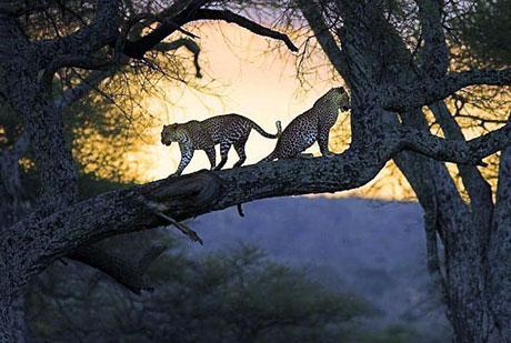 Hayvanlar dünyasında neler oluyor? galerisi resim 22