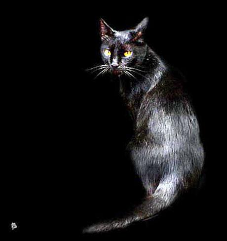Hayvanlar dünyasında neler oluyor? galerisi resim 38