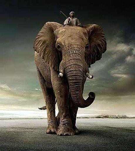 Hayvanlar dünyasında neler oluyor? galerisi resim 40