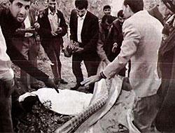Küçük Ceylan'ı kim öldürdü?
