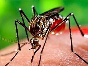 Zika aşısı için ilk adım atıldı