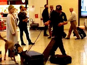 Almanya'dan gelen yolcular köpekle arandı